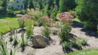 native-designs-landscaping-Wet land garden