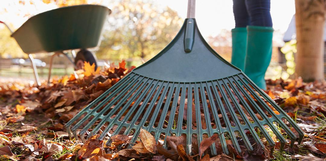 closeup of raking leaves for nativedesignslandscaping.com