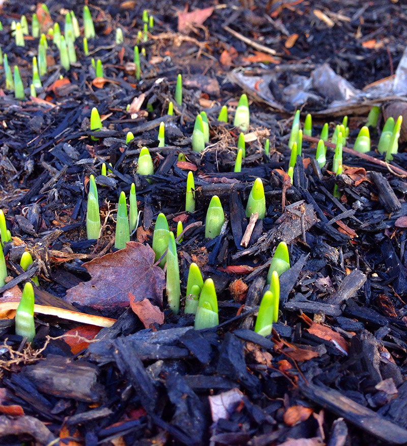 seedling-growing-on-burned-wood